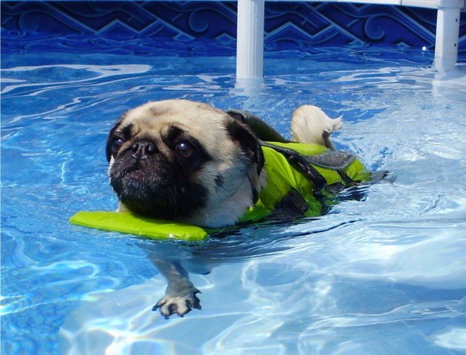 Sam's Guide to Swimming