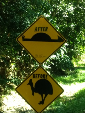 The top sign is just a speed bump sign. It is regularly vandalized to look like cassowary roadkill