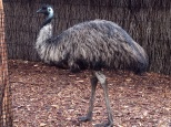 An emu This bird can lift a bus with it's beak. Just kidding, of course it can't do that. Don't be stupid.